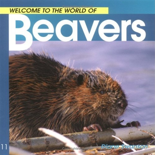 Welcome to the World of Beavers